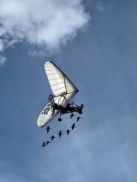 Ultraleichtflugzeug begleitet von Gänsen