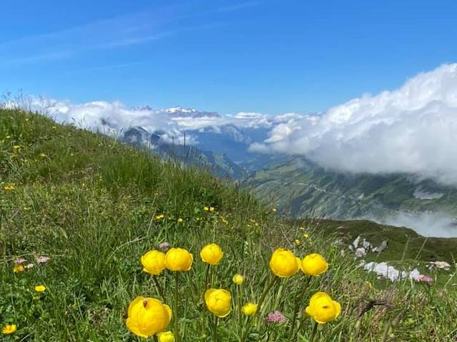 Klausen Pass Berge und Blumenwiese