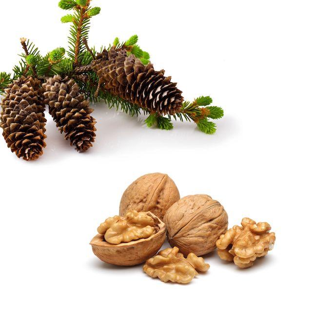 Nüsse und Tannenzweig